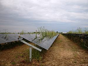 solar plant weeds