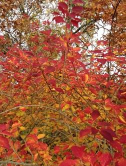 Autumn October 13, 2013