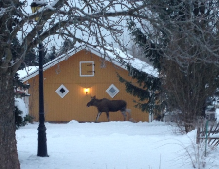 Moose in the garden 2