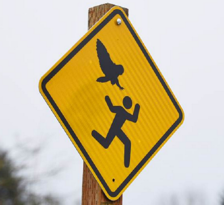 Warning for predatory owls - Bush's Pasture park, Salem Oregon