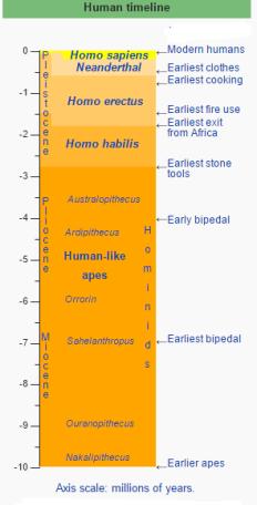 Homo timeline (Wikipedia)