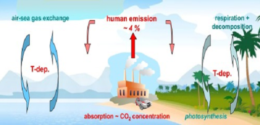 Carbon Cycle - Hermann Harde in Global and Planetary Change